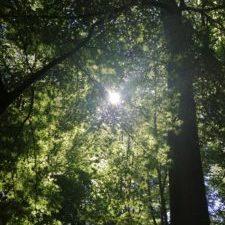 forest6.jpg