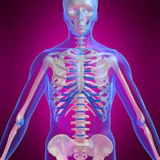 Anatomy, physiology and pathology